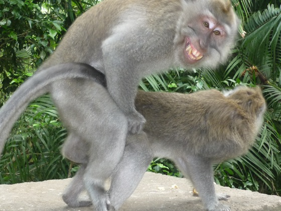 Bali - Love in Monkey Forest - di PlutoAndrea80