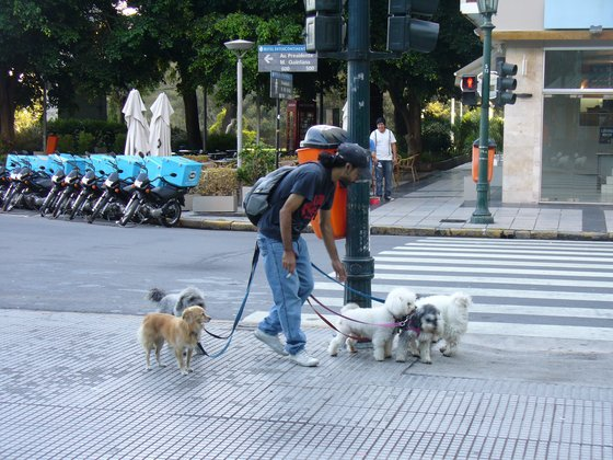 Buenos Aires - Dog sitter a Buenos Aires - di giol74