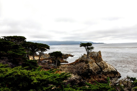 California - LONELY CYPRESS - di MICHELE77