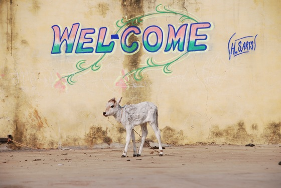Cultura - WELCOME - di Tracy