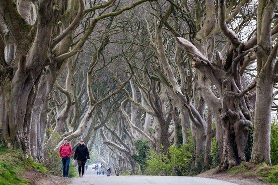 Irlanda - The Dark Hedges - di balzax