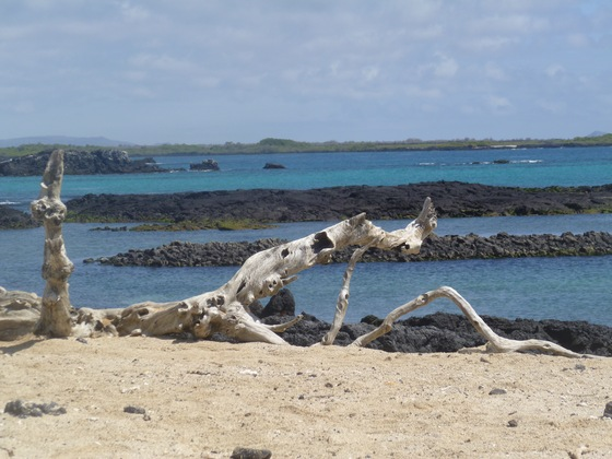 Isole Galapagos - Natura selvaggia - di Danielkenth