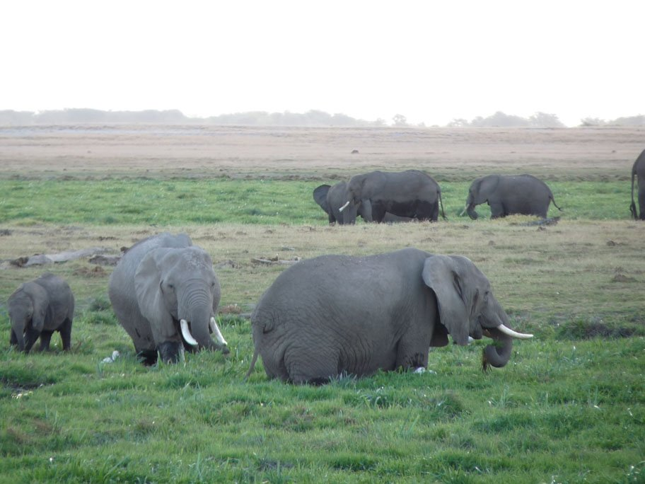 Amboseli National Park Kenya  city photo : Amboseli national park Amboseli national park Ol Tukai, Kenya di ...