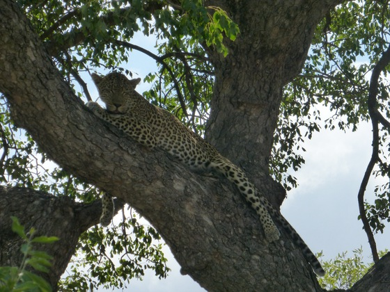 Kruger National Park - MAGNIFICA EMOZIONE - di And61
