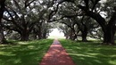 New Orleans: Oak Plantation - Louisiana
