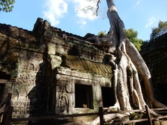 tempio Ta Prohm (visto in tomb Raider) - Luang Prabang