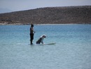 Surfing Dog - Mare