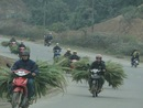 moto - on the road - Mekong