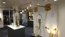 Phallological museum - Phallological museum