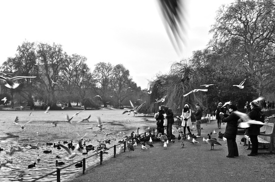 St James's Park - Easy flying - di Ertyu