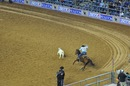 Rodeo a houston - Texas