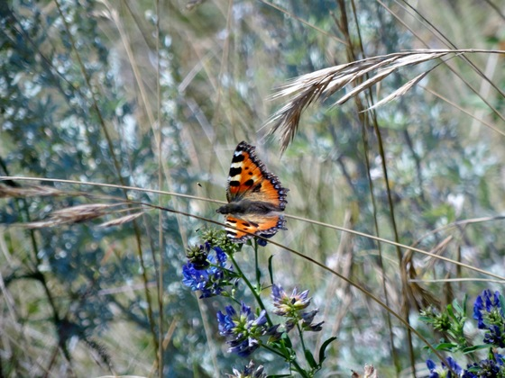Valle d'Aosta - Butterfly  - di Sergio Ghisoni