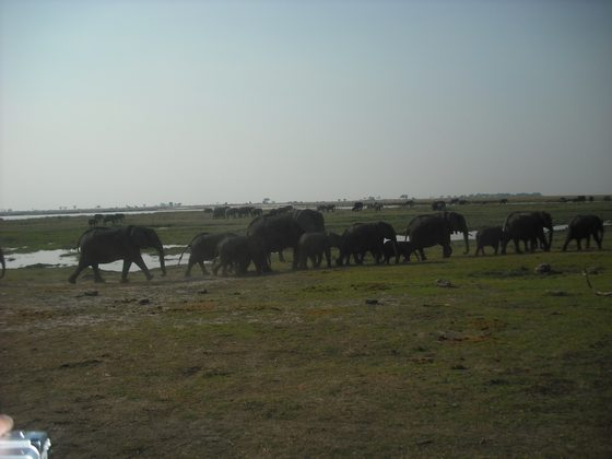 Sudafrica - elephant valley - di mose