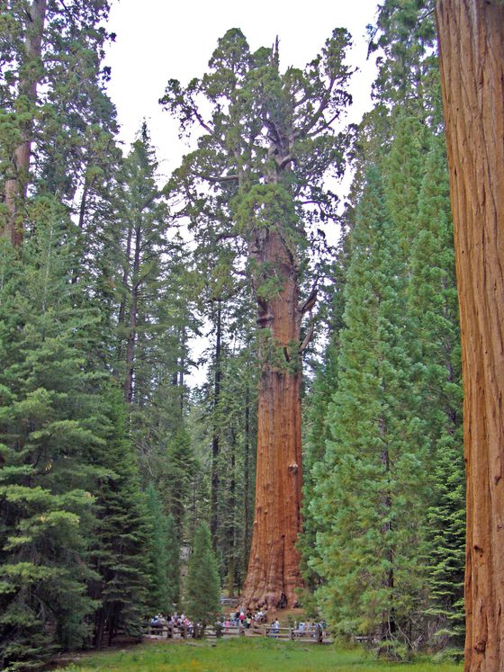 Sequoia National Park - The General Sherman Tree - di antilope77